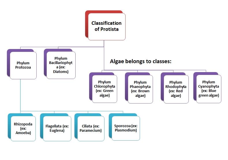 Klasifikasi Kingdom Protista