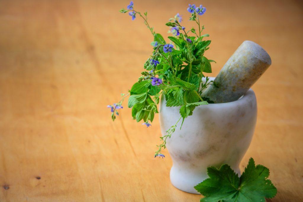 Nama Latin Tumbuhan Tanaman Obat