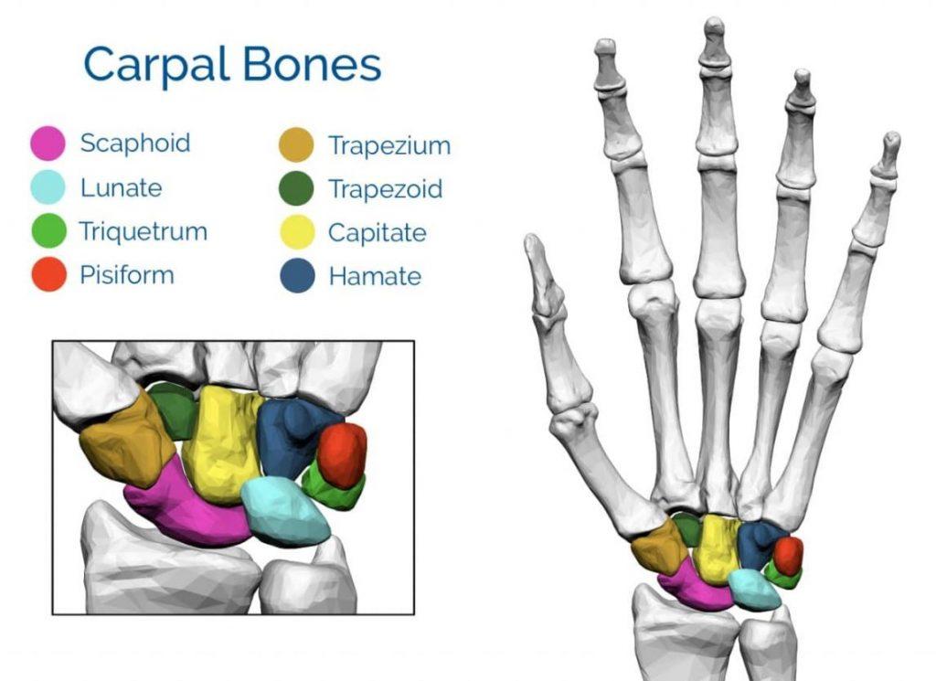 Tulang Pergelangan Tangan